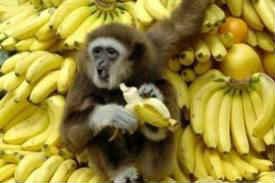 lyublyu-bananyi