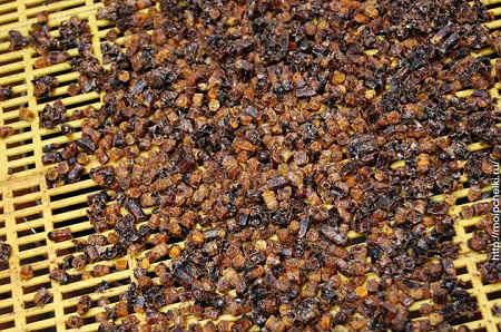 перга пчелиная полезные свойства как принимать