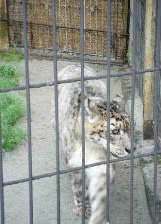 Kaliningradskiy-zoopark.