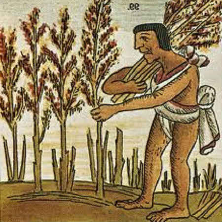 lechebnye-svojstva-amaranta