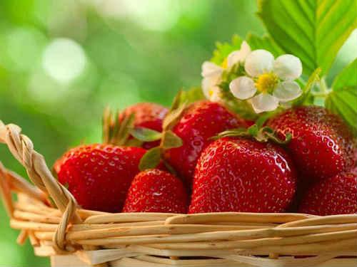 ягода клубника