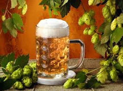 пиво из хмеля