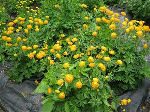 Калининград ботанический сад