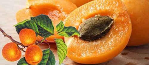 косточки абрикосов