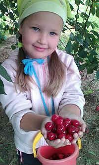 вишневое варенье без косточек