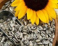 Семечки подсолнуха — польза и вред сырых, жареных, белых