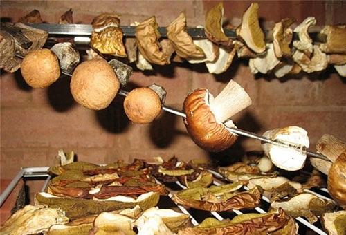 как сушить грибы в духовке