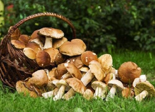 как сушить грибы в домашних условиях в духовке