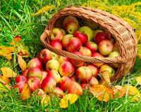 яблоки польза и вред для здоровья