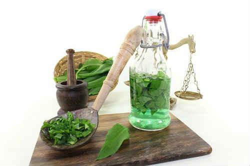 zolotoj-us-lechebnye-svojstva-i-protivopokazaniya