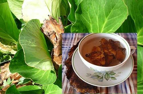 корень бадана лечебные свойства и противопоказания