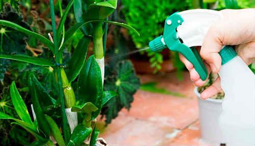 янтарная кислота польза для комнатных растений