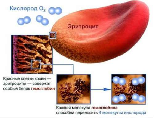 повышенные эритроциты в крови
