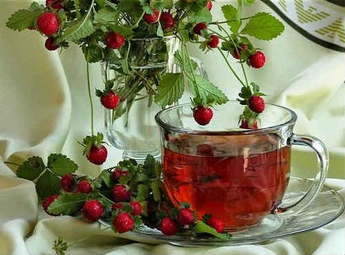 лечебные свойства чая из листьев земляники