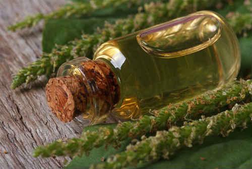 лечебные свойства сока подорожника
