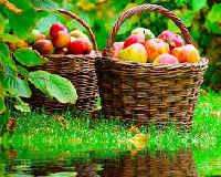 яблочный сидр польза