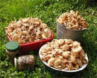 Как заготовить грибы на зиму — рецепты маринованных, соленых, жареных