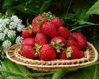 Песочный пирог с ягодами и сметанной заливкой в духовке