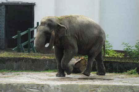 Kaliningradskiy-zoopark-sloniha-Pregolya