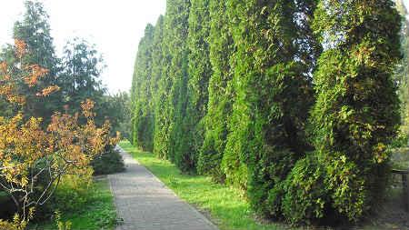 kaliningradskiy-botanicheskiy-sad