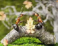 Как избавиться от муравьев в квартире