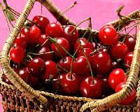 Вишня - польза и вред ягод, листьев, полезные свойства чая