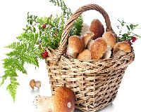 Как заморозить грибы на зиму в домашних условиях