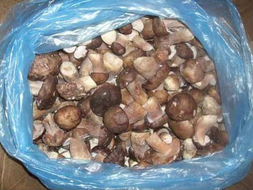 заморозка отварных грибов