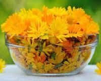 Календула — лечебные и полезные свойства и противопоказания
