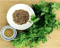 Кориандр (кинза) - полезные свойства и противопоказания