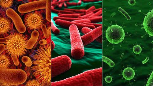 восстановление микрофлоры  препараты