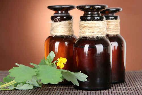Чистотел - полезные свойства и противопоказания, рецепты