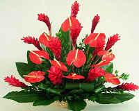 Цветок антуриум - уход и содержание в домашних условиях