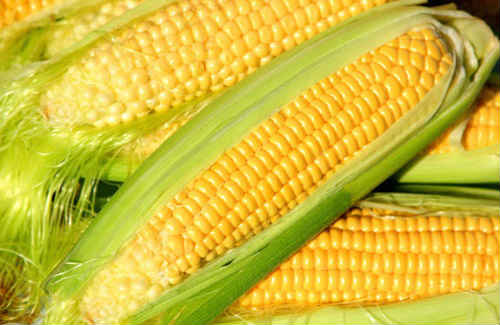 кукуруза для здоровья