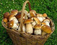 Грибной суп из свежих, сушеных, замороженных белых грибов - рецепты