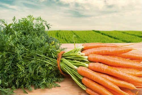 посадка моркови семенами весной